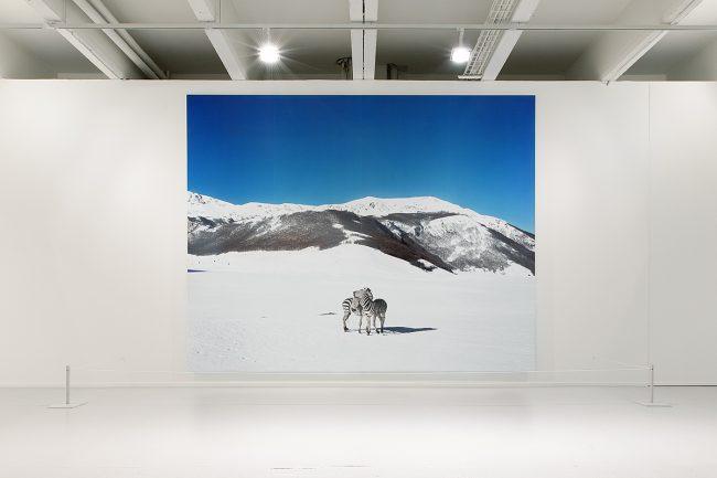 Paola Pivi, Zebras, Lille, Tri Postal, Lille 3000 ©Thomas Karges